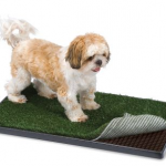 picture 221 150x150 Let your dog keep its new years resolutions with the doggy treadmill