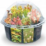 picture 23 150x150 How to grow your own Venus Fly Trap with this handy growing kit