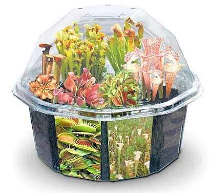 picture 23 Grow carnivorous plants right on your desktop