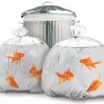 goldfish garbage bags 150x150 Fish School Training Kit turns your boring goldfish into an A student