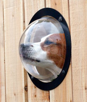 pet observation porthole The Greatest List of Must Have Pet Gadgets