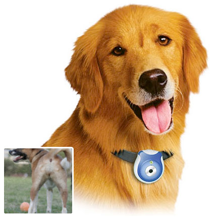 Pet Eye View Camera The Greatest List of Must Have Pet Gadgets