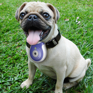 the greatest list of must have pet gadgets one more gadget